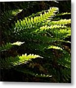 Common Polypody Metal Print