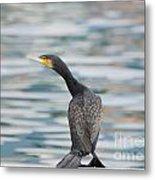Cormorant Bird Metal Print