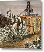 Cotton Harvester, 1886 Metal Print