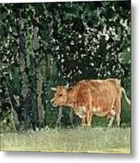 Cow In Pasture Metal Print