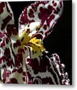 Cribet Exotic Orchids Metal Print by C Ribet