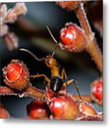Curious Ant Metal Print