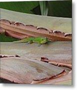 Curious Gecko Metal Print