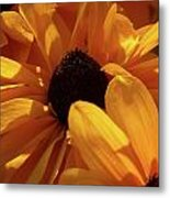 Cutleaf Tiger Eye Metal Print