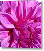 Dahlia Named Lilac Time Metal Print
