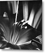 Day Lily Tippecanoe County Indiana Metal Print
