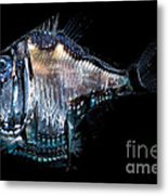 Deep-sea Hatchetfish Metal Print