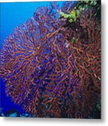 Deep Water Sea Fan Metal Print