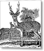 Deer Metal Print by Granger