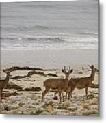 Deer On Beach Metal Print