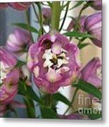 Delphinium Named Magic Fountains Lilac Pink Metal Print