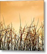 Desert Grass Metal Print