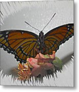 Designer Butterfly Collection Metal Print