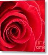 Detail Of Red Rose Metal Print