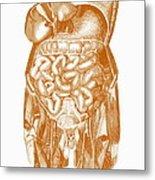 Digestive System Metal Print