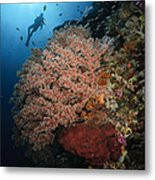Diver Over Soft Coral Seascape Metal Print