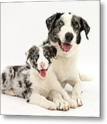 Dog And Puppy Metal Print