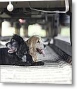 Dogs Lying Under A Train Wagon Metal Print