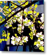 Dogwood Blossoms Metal Print