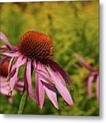 Eastern Purple Coneflower Metal Print