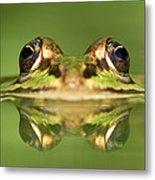 Edible Frog Rana Esculenta Metal Print