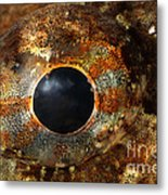 Eye Of Shorthorn Sculpin Metal Print