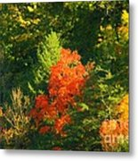 Fall Colors Metal Print