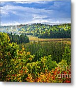 Fall Forest Rain Storm Metal Print by Elena Elisseeva