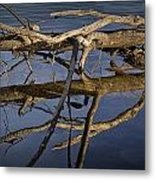 Fallen Tree Trunk With Reflections On The Muskegon River Metal Print
