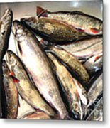 Fine Catch Of Trout Metal Print