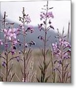 Fireweed In A Sea Of Grass Metal Print