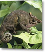 Fischers chameleon wood print by david aubrey fischers chameleon metal print thecheapjerseys Choice Image