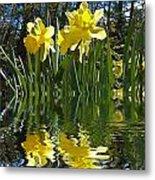 Flooded Daffodils Metal Print