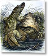 Florida Alligators Metal Print