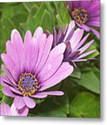 Flower Metal Print by Amr Miqdadi