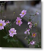 Flowers At The Cloisters Metal Print