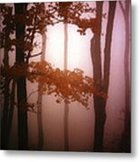 Foggy Misty Trees Metal Print