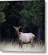 Forest Elk Metal Print