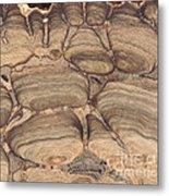 Fossil Stromatolite Metal Print