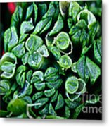 Fresh Chives Metal Print by Susan Herber