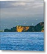 Gannets In Flight And Perce Rock Metal Print by Yves Marcoux