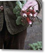 Gardener Holding Freshly Picked Radishes Metal Print