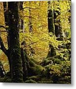 Glenveagh National Park, County Metal Print