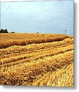 Golden Harvest Field 1 Metal Print