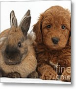 Goldendoodle Puppy And Rabbit Metal Print