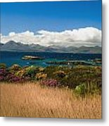 Gorse And Rhododendron Bushes Metal Print