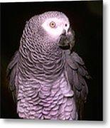 Gray Parrot Metal Print