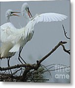 Great Egret Pair Metal Print