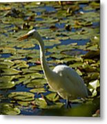 Great White Egret Perched On A Rock Metal Print