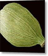 Green Cardamom Pod, Sem Metal Print by Steve Gschmeissner
